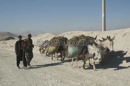 afghan men i podrost ladena osly
