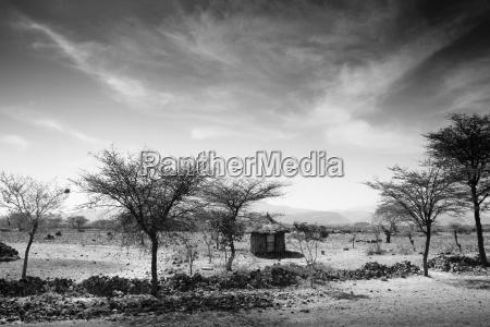 zwolniony drzewo drzewa pustynia afryka oblok
