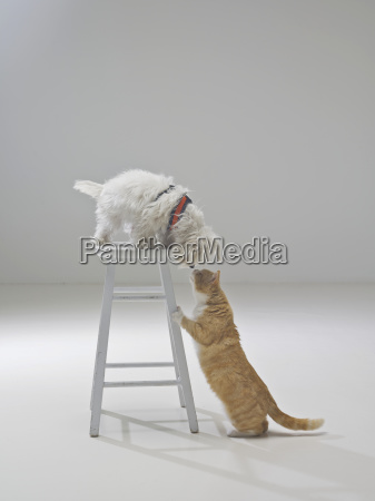 ciekawy kot i pies santa barbara