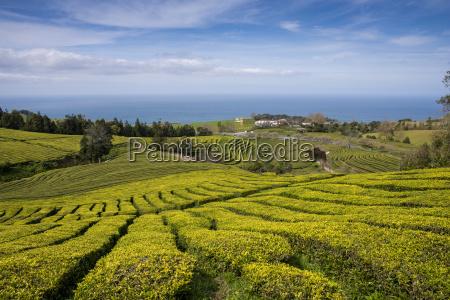 niebieski herbata lisc jazda podrozowanie rolnictwo