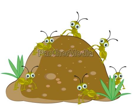 gora anhoehe wzgorze gory zwierze mrowka