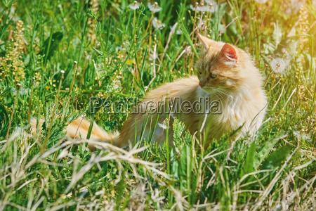 zwierze domowe kuscheltier pluszak lieblingstier mieze