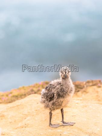 zwierze ptak przyrody male zwierzeta baby