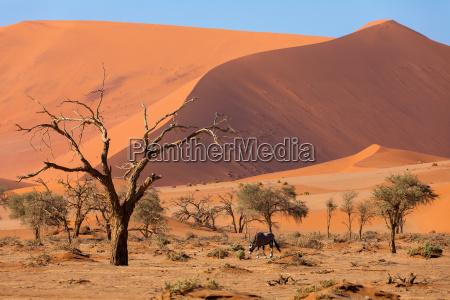 dead vlei krajobraz w sossusvlei namibia