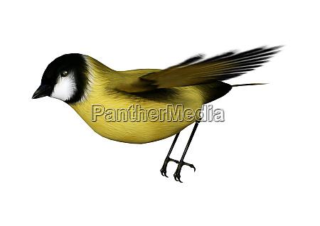 renderowanie 3d songbird goldflinch na bialym