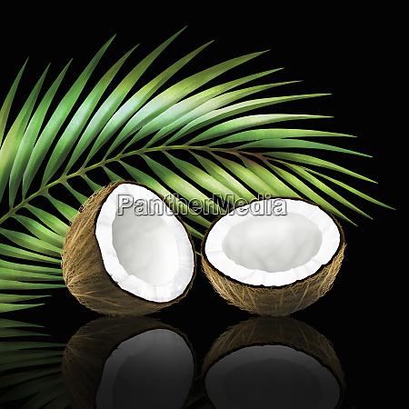 kokosnuss in zwei haelften mit kokosblatt