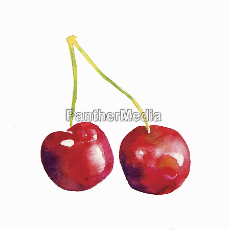 watercolour painting of two cherries