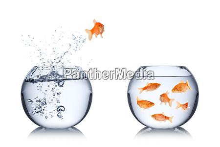 koncepcja zwrotu ryb