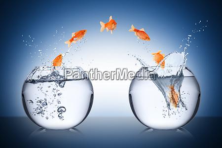 koncepcja zmiany ryb