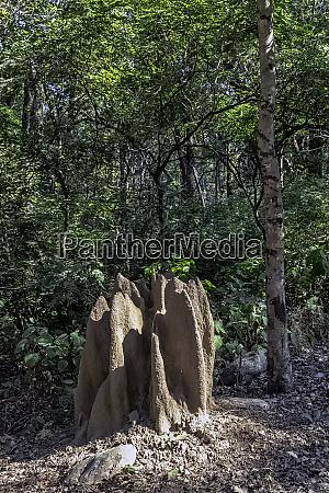 kopiec termitow wewnatrz dzungli jim corbett