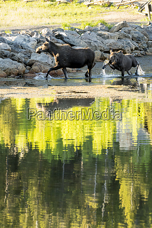 beautiful nature photograph of adult and