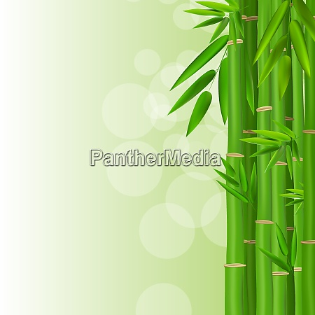 colorful stems and bamboo leaves background