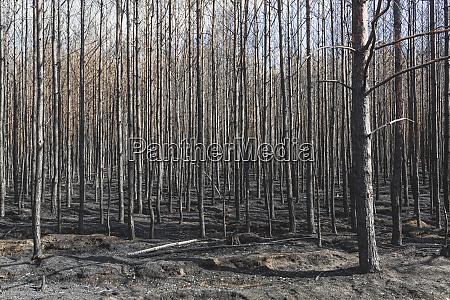 niemcy brandenburgia treuenbrietzen las po pozarze