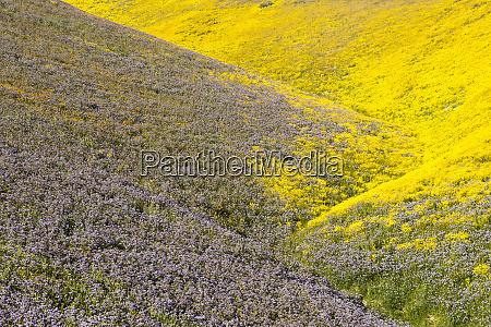 malowniczy krajobraz z zoltymi i fioletowymi