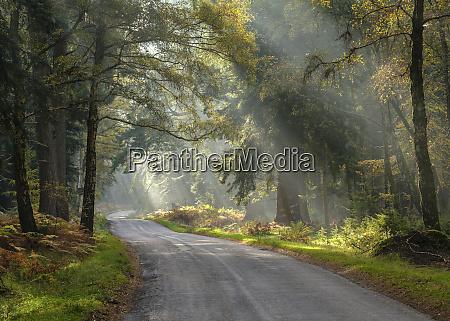promienie sloneczne widoczne w lekkiej mgle