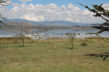 landscape at lake elementeita with seagulls