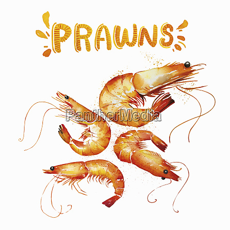 watercolour painting of fresh prawns