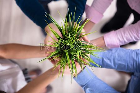 biznesmeni posiadajacy zielone rosliny