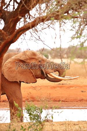 an elephant under a tree beside