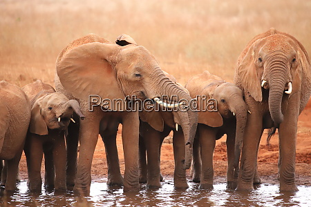 a, group, of, elephants, at, a - 26918349