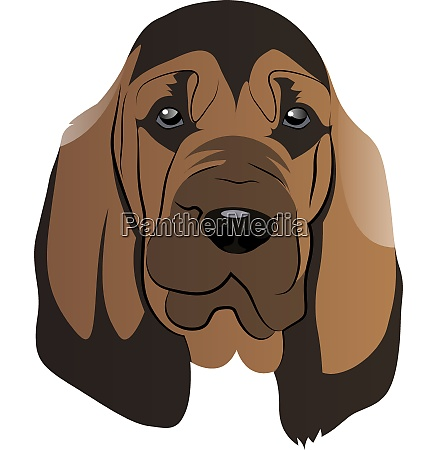 brown blood hound illustration vector on