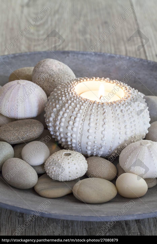 morska, martwa, natura, ze, świecą - 27080879