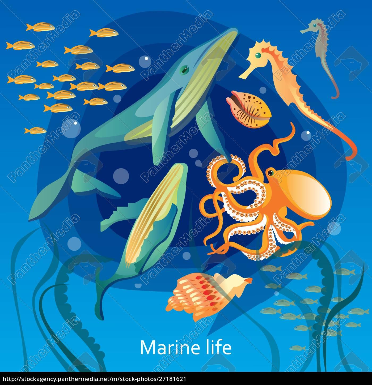 ocean, podwodne, tło, życia., sea, underwater - 27181621