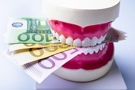 model zeba z banknotami euro na