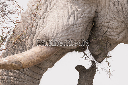 a close up of an elephants