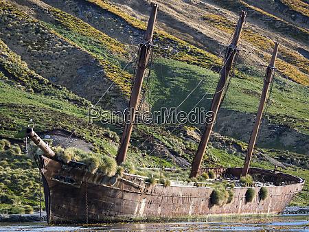 wreck of the bayard in ocean