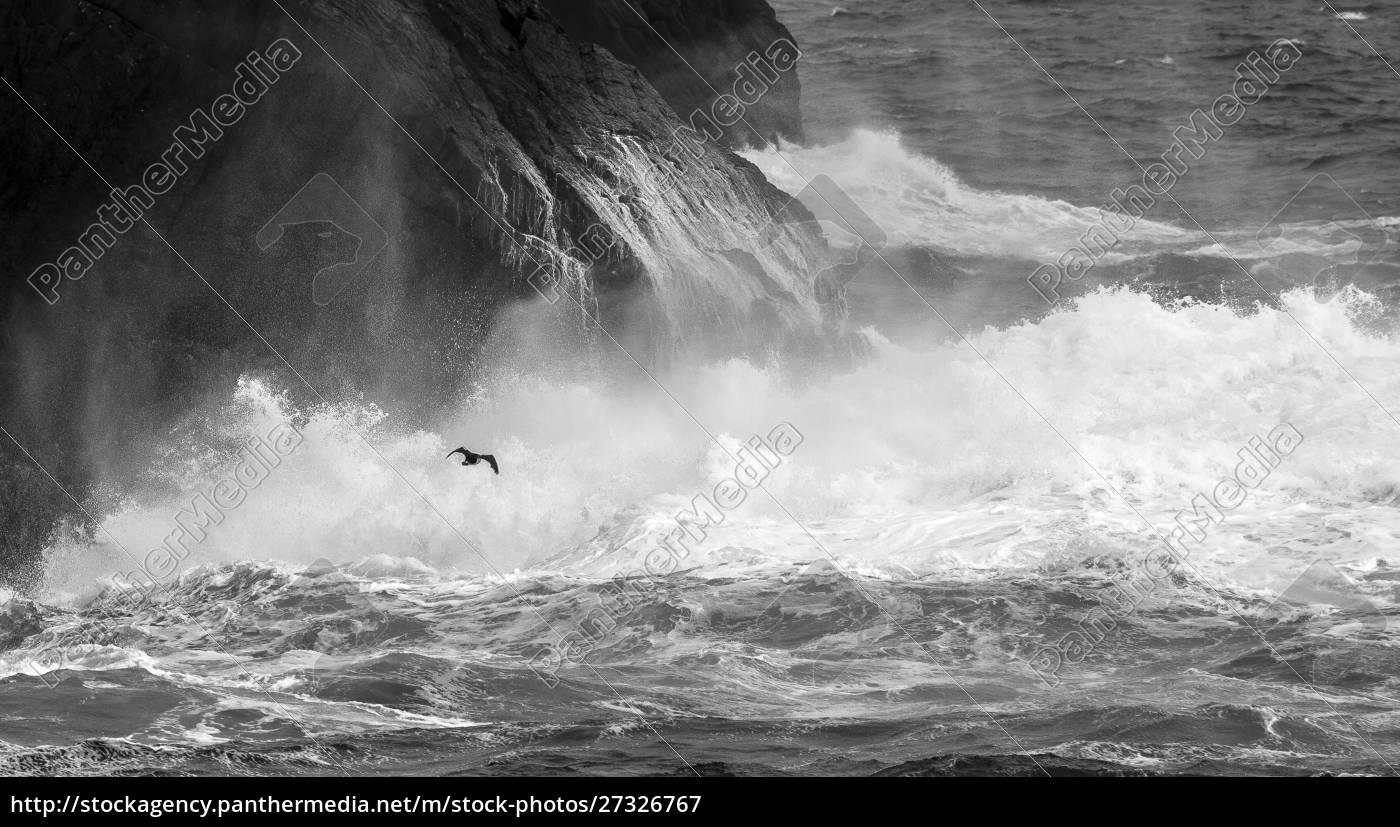 antarktyda, południowy, atlantyk., kormoran, przelatujący, nad, morzem. - 27326767