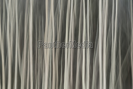 abstract tree pattern great smoky mountains