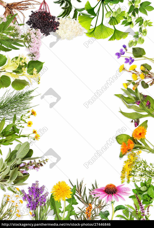 rama, z, głównymi, roślinami, leczniczymi - 27446846