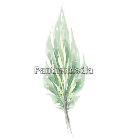 green feather painting vector or color