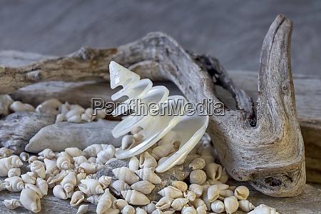 Żeglarskie, martwa, natura, z, powłoką - 27493397
