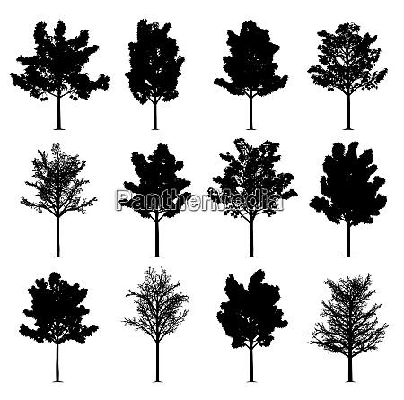 drzewa klonowe