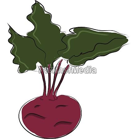 cartoon purple beetroot vector illustration on