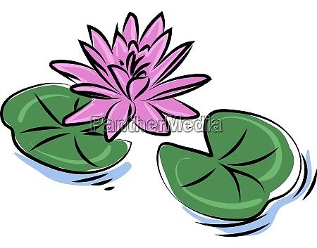 purple lotus flower illustration vector on