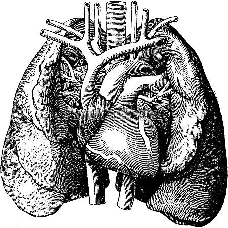 serce w srodku pluc grawerowanie vintage