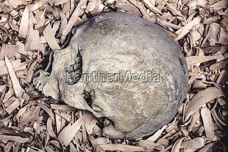 detail of human skull on background