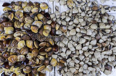 vietnam haiphong seafood market shellfish