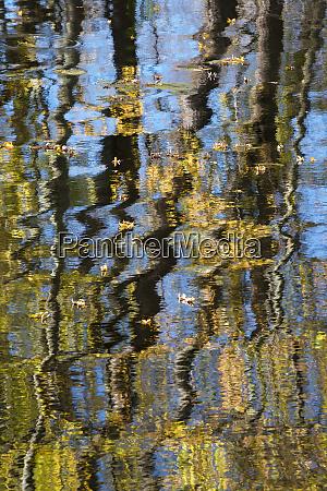usa minnesota autumn leaf reflections on
