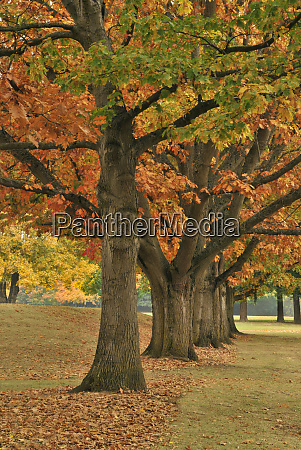 usa oregon portland red oaks at