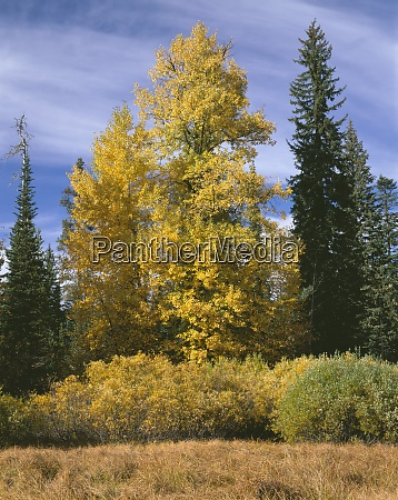 usa oregon willamette national forest willows