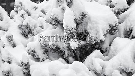 usa oregon keizer snow falling in
