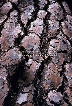 usa oregon bend the bark of