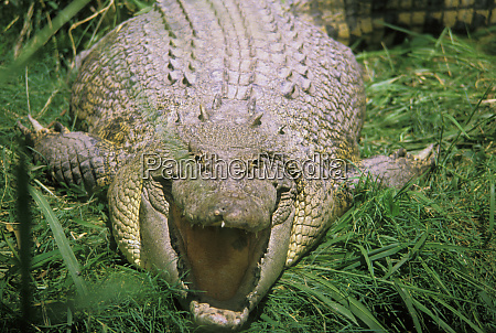 australia cairns croc farm near city