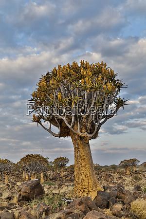 krajobraz kolczan namibia