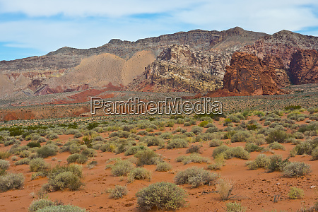 usa nevada mesquite gold butte national
