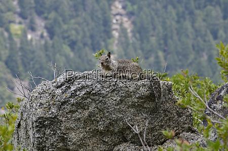 usa california yosemite national park california